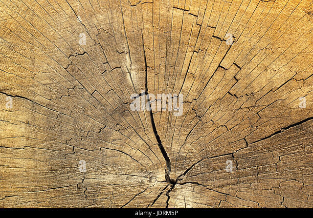 cracks on spruce wood, detailed texture of annual ring on old wooden beam - Stock Image
