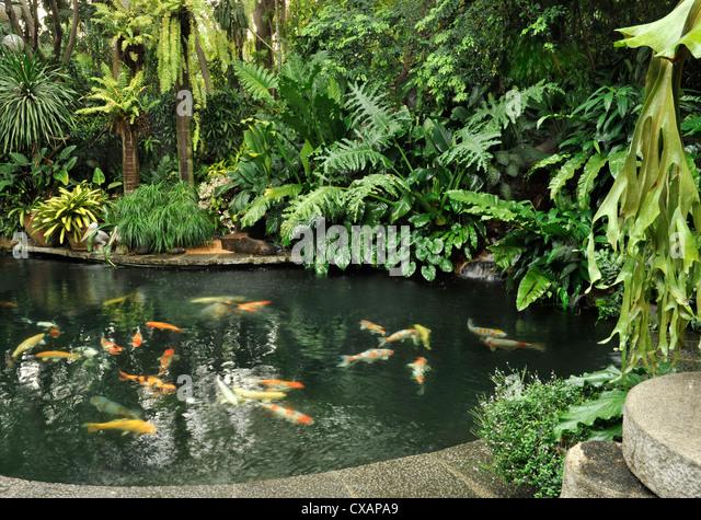 Fish Ponds Stock Photos Fish Ponds Stock Images Alamy