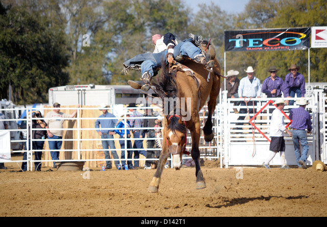 how to get bucking bronco at the fair