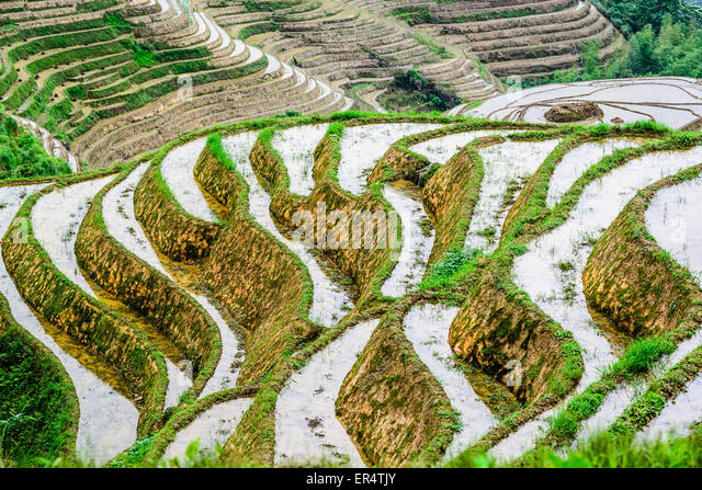Terrace farming hillside stock photos terrace farming for Terrace cultivation