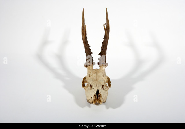 catholic singles in antlers They are true bone and are a single the chalk is high in calcium which is ingested by the deer and helps growth in the antlers shed antler hunting.