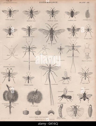 entomology relatives insects Forensic entomology is the study of insects associated with a body after death, mainly to determine time since death it is the use of insects, and their arthropod relatives inhabiting decomposing remains, that aid legal investigations.