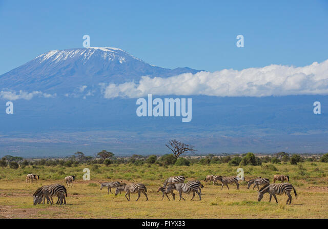 beneath kilimanjaro Read about the advantages and disadvantages of all kilimanjaro climb routes,  the camp beneath mawenzi peak is one of the most scenic on the mountain.