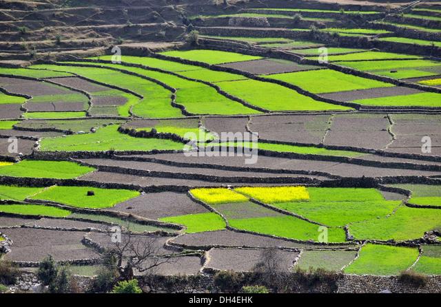 Bageshwar stock photos bageshwar stock images alamy for Terrace farming model