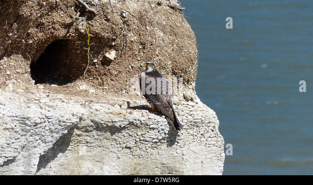 hunt cliff stock photos amp hunt cliff stock images alamy