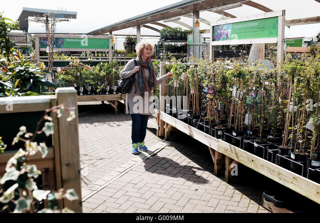 Surprising Wyevale Garden Centre Stock Photos  Wyevale Garden Centre Stock  With Luxury Woman Looking Round A Wyevale Garden Centre Looking At Plants And Trees To  Buy  Stock With Lovely The Shins Garden State Also Gardening Gloves For Men In Addition Landscape Gardeners East London And Garden Solar Lights Review As Well As Spring Plants For Garden Additionally Solar Garden Lanterns Uk From Alamycom With   Luxury Wyevale Garden Centre Stock Photos  Wyevale Garden Centre Stock  With Lovely Woman Looking Round A Wyevale Garden Centre Looking At Plants And Trees To  Buy  Stock And Surprising The Shins Garden State Also Gardening Gloves For Men In Addition Landscape Gardeners East London From Alamycom