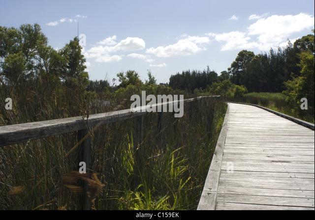 Boardwalk Through The Mangroves Bicentennial Park Homebush Sydney NSW Australia