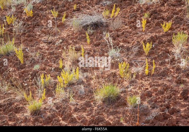 Soil crust utah stock photos soil crust utah stock for Example of soil