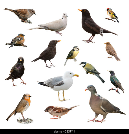 Garden Birds Cut Out Stock Photos Garden Birds Cut Out Stock