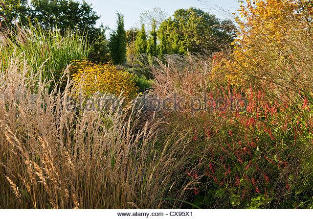 Ornamental grasses stock photos ornamental grasses stock for Ornamental grass border