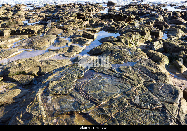 Landscaping Pebbles Sunshine Coast : Proliferate stock photos images alamy