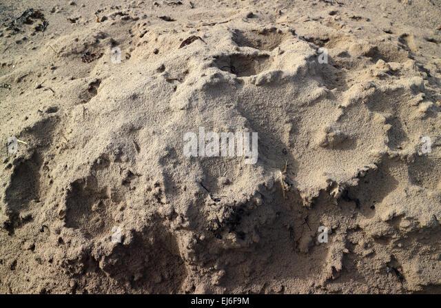 Silica Sand Stock Photos & Silica Sand Stock Images - Alamy