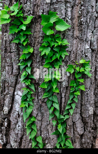 Overgrowth stock photos overgrowth stock images alamy - Flowers that grow on tree trunks ...