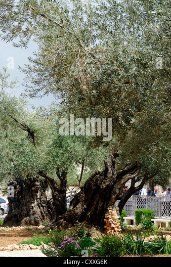 Gnarly Trees Stock Photos Gnarly Trees Stock Images Alamy
