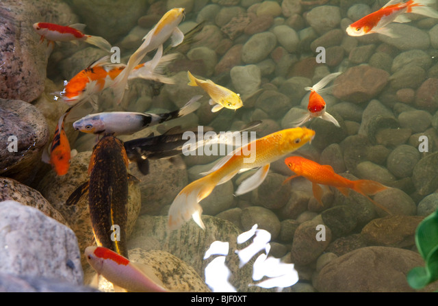 Artificial pond stock photos artificial pond stock for Artificial pond water