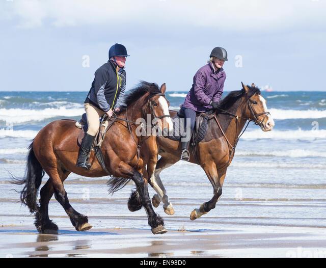 Saltburn Beach Dogs