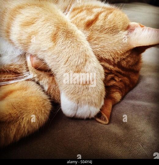 bad cat stock photos bad cat stock images alamy. Black Bedroom Furniture Sets. Home Design Ideas