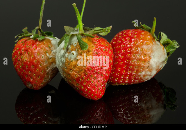 Rotten Strawberries Rotten Strawberries | ...