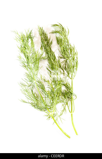 how to keep cut dill fresh