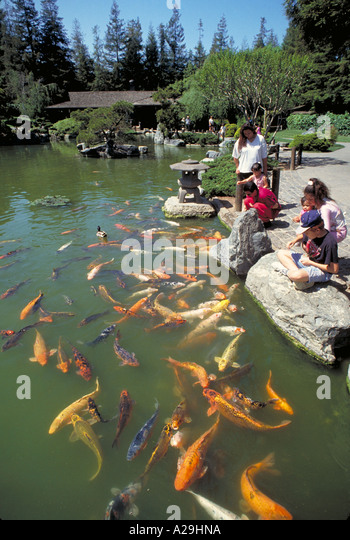 Japanese friendship garden san jose excellent japan in for Japanese garden san jose koi fish