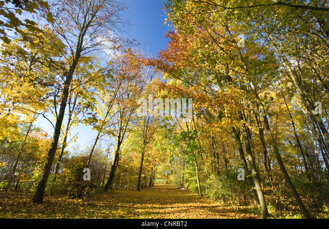 Colouration Stock Photos Amp Colouration Stock Images Alamy