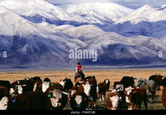 Image result for Cowgirls and Cows