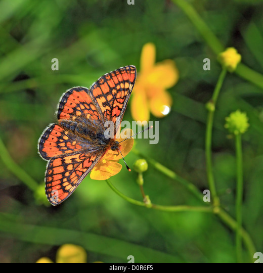 butterfly on yellow color - photo #16