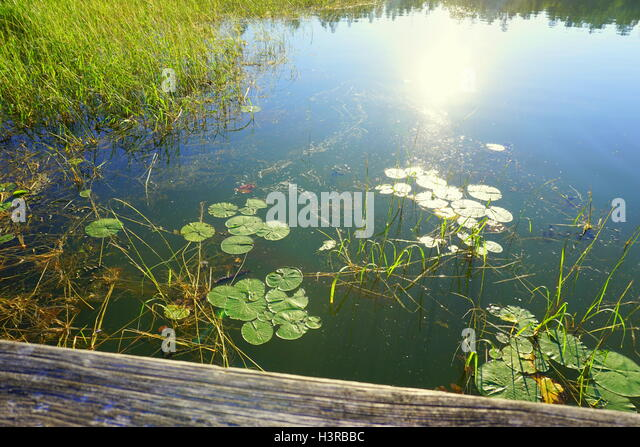 Itasca stock photos itasca stock images alamy for Camping au jardin de mon pere