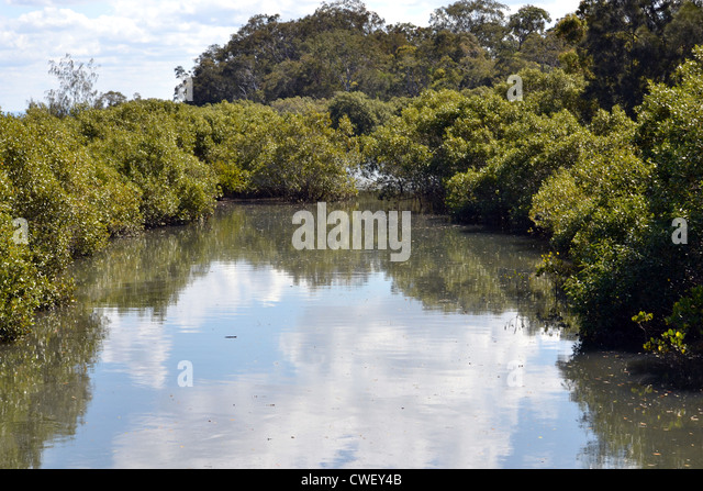 mangroves australian stock photos mangroves australian. Black Bedroom Furniture Sets. Home Design Ideas