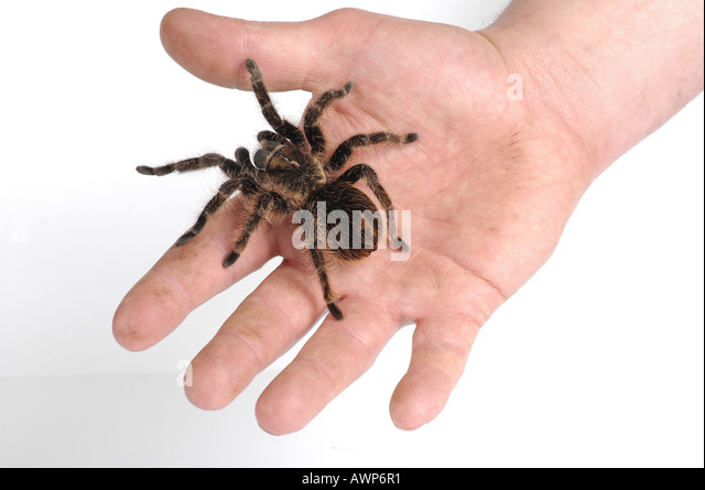 Breathtaking Folding Trapdoor Spider Images - Exterior ideas 3D ...