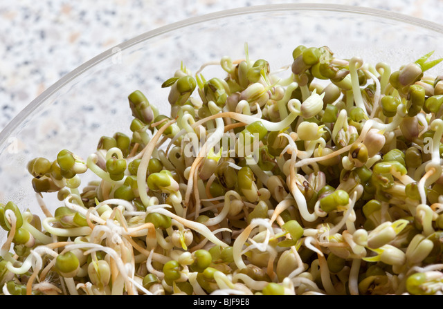 Sprouting Bean Stock Photos & Sprouting Bean Stock Images - Alamy