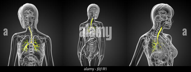 Tar - Skeleton Lungs