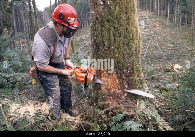 how to cut down a big tree