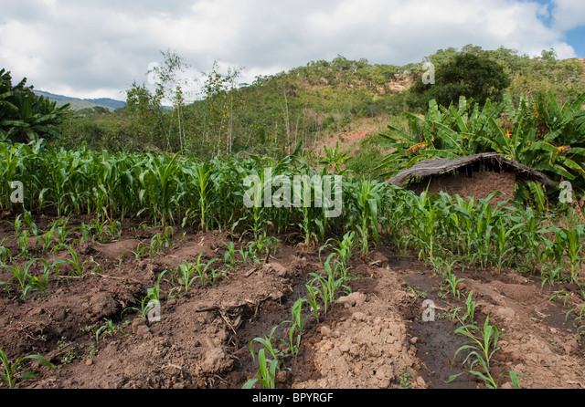 subsistence agriculture Definition of subsistence farming - the practice of growing crops and raising livestock sufficient only for one's own use, without any surplus for trade.