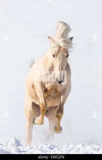 Bucking Horse Stock Photos & Bucking Horse Stock Images - Alamy
