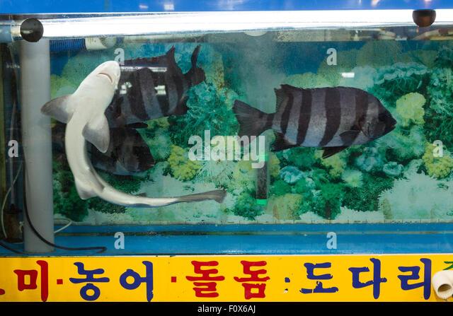 Small fish tank stock photos small fish tank stock for Small sharks for fish tanks
