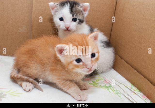kittens houston