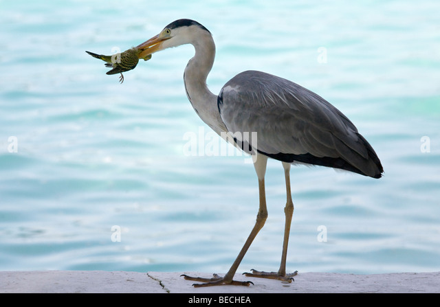 side necked stock photos amp side necked stock images   alamy