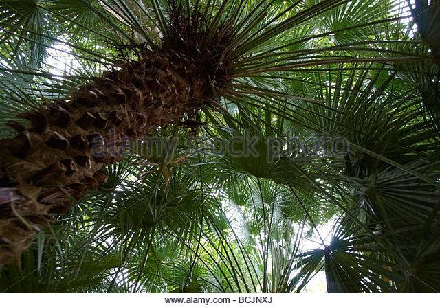 Palmengewaechse stock photos palmengewaechse stock for Jardin west palm
