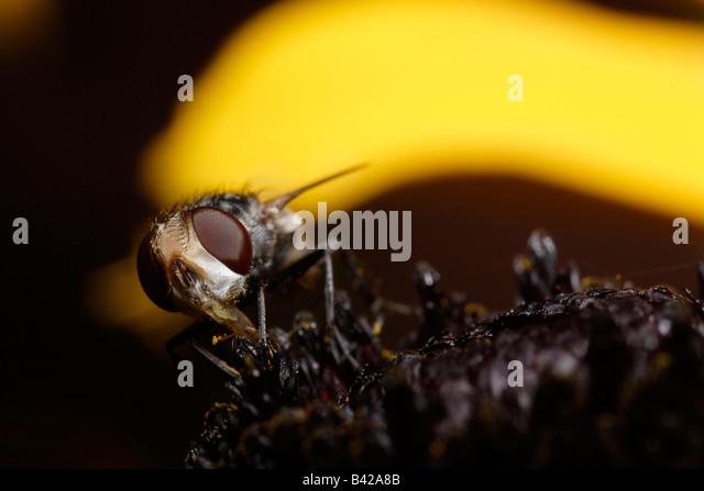 Anthomyiidae | Project Gutenberg Self-Publishing - eBooks ...