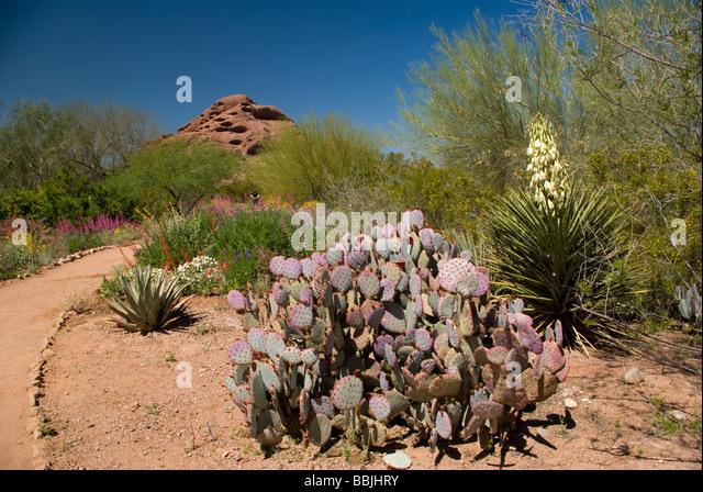 Desert Botanical Gardens Stock Photos Desert Botanical