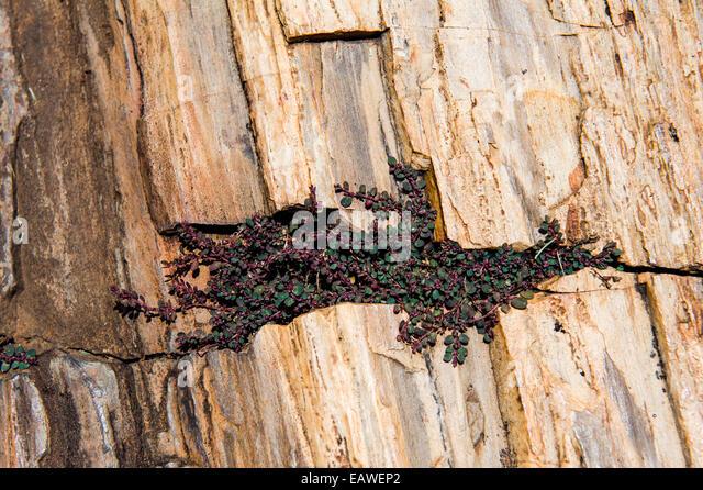 Pretoria transvaal museum stock photos pretoria transvaal museum stock images alamy - Flowers that grow on tree trunks ...