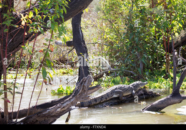 Aligator Stock Photos Amp Aligator Stock Images Alamy