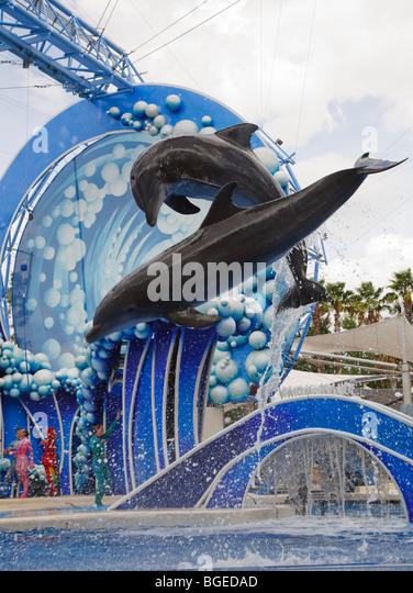 dolphin flip stock photos dolphin flip stock images alamy. Black Bedroom Furniture Sets. Home Design Ideas