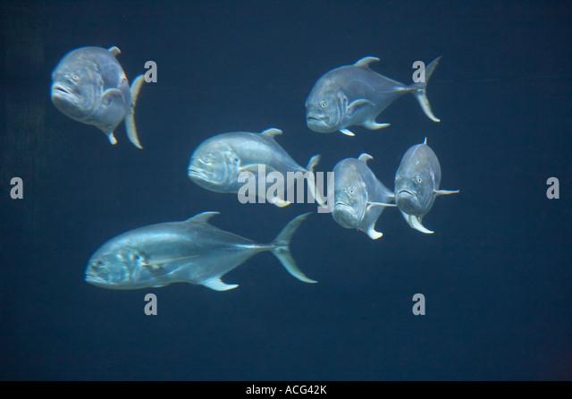 Tampa florida aquarium stock photos tampa florida for Florida tropical fish
