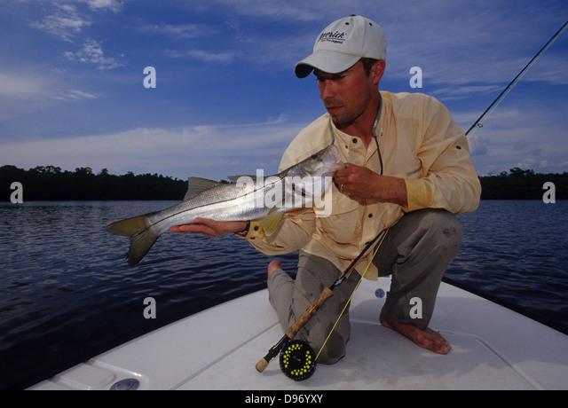 Centropomus stock photos centropomus stock images alamy for Everglades city fishing