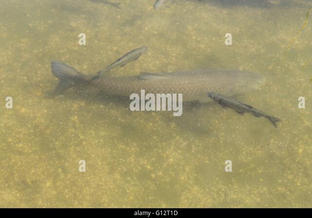 Pond bottom stock photos pond bottom stock images alamy for Ornamental pond fish port allen