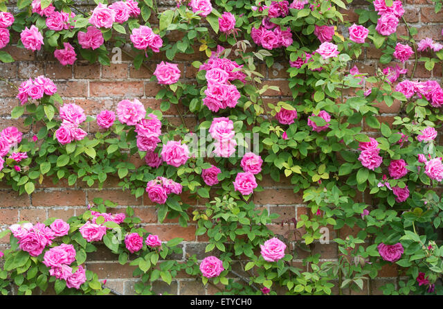 Love Garden Roses: Beautiful, Dark And Cottages On Pinterest