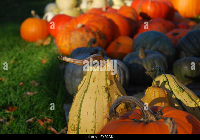 fall decorations for sale stock image - Fall Decorations For Sale