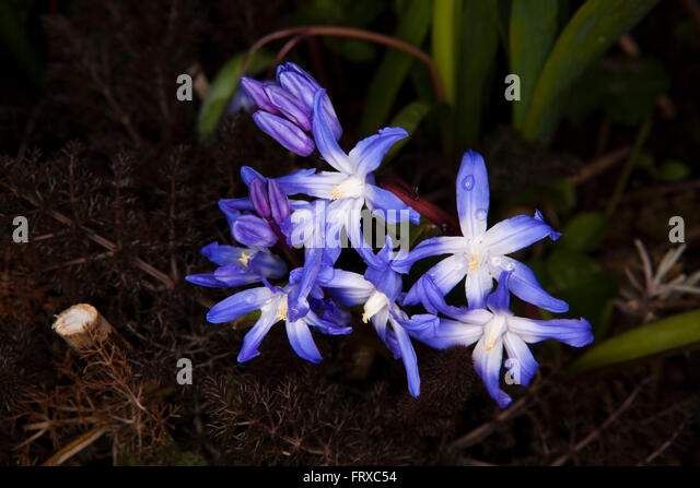 Star Shaped Flowers Stock Photos & Star Shaped Flowers